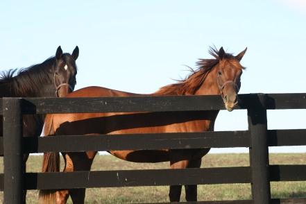 Woodford Reserve Horse Ranch, Versailles, Kentucky